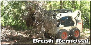 Brush Removal