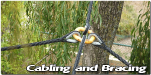 Cabling and Bracing