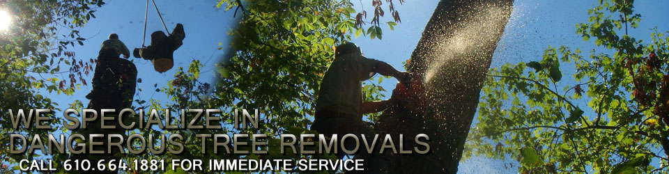 We specialize in dangerous tree removals!
