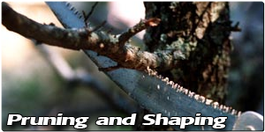 Pruning and Shaping