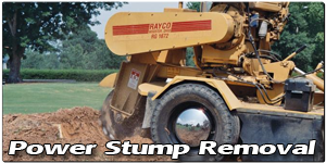 Power Stump Removal